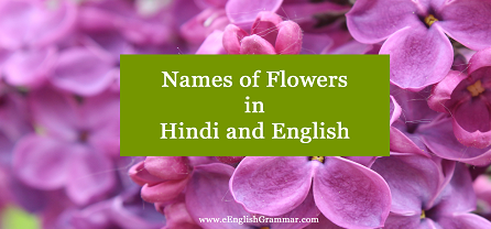 List Names Of Flowers In Hindi And English Eenglishgrammar Com