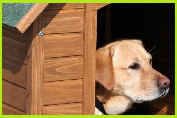 Como adiestrar f cil a tu perro casetas para perros for Casetas para huertos baratas