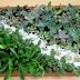 Mujeres de Jesús María realizan  artesanías con plantas naturales