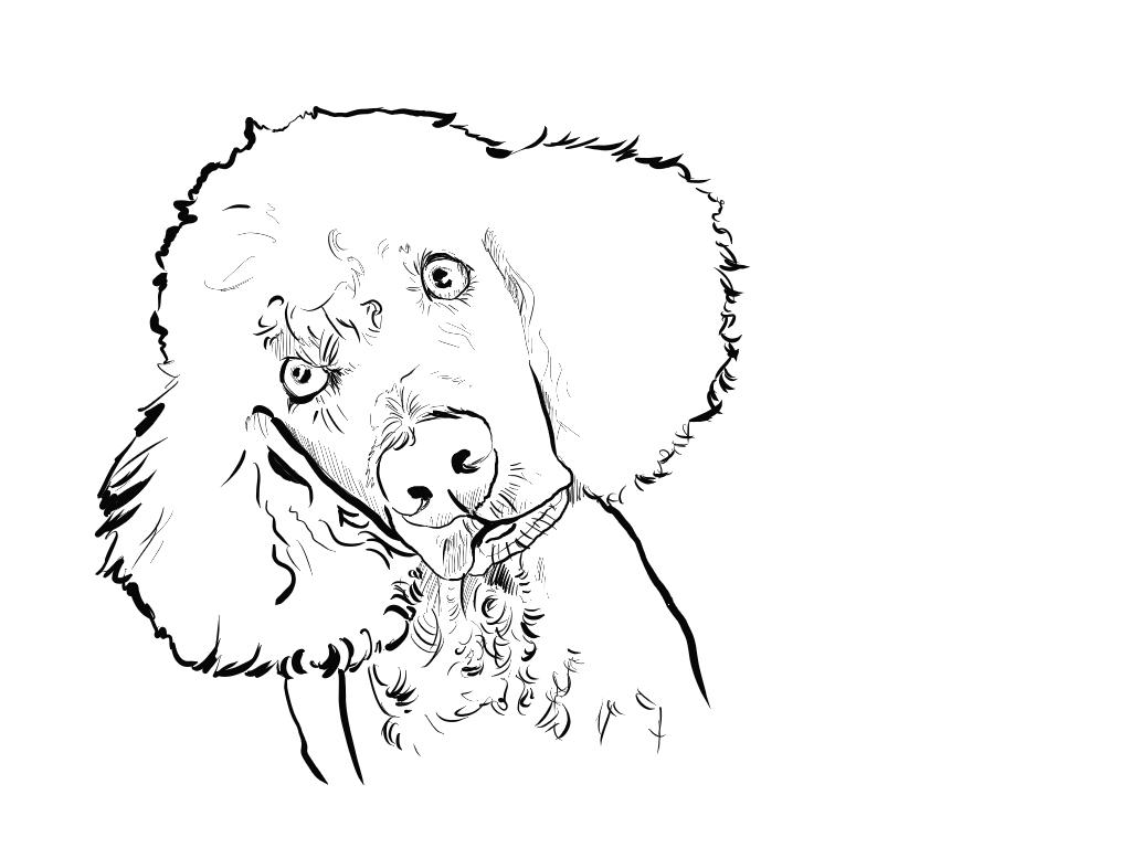 Cachorro De Raça Bonitos Desenhos Preto E Branco Para Colorir