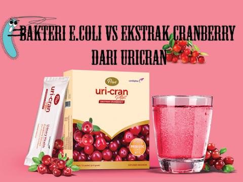 Bakteri E.Coli vs Ekstrak Cranberry dari Uricran