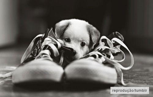quase perfeito, cachorro fofo tumblr