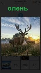 несколько оленей стоят на поле в свете заката солнца