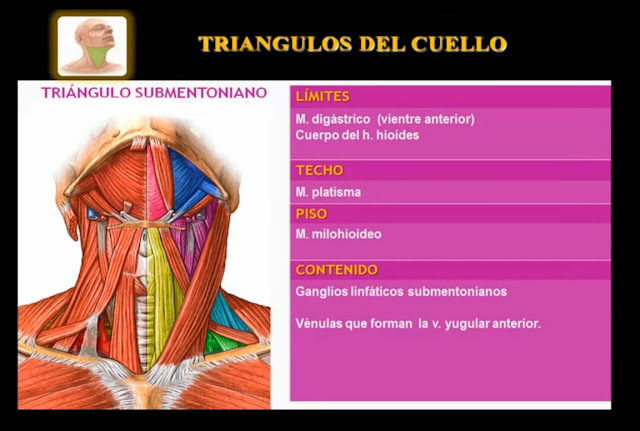 Triángulo submentoniano del cuello