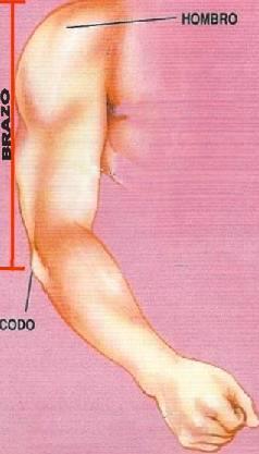 Imagen de un brazo a color