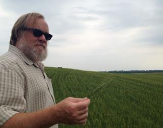 Hard wheat and durum wheat