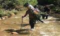 Αχαΐα: Στους ώμους, πάνω από 3,5 ώρες, μετέφεραν τα 750 δενδρύλλια χασίς οι αστυνομικοί (φώτο)