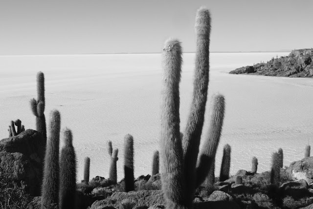 Isla Incahuasi, no Salar de Uyuni
