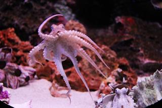 moluscos resumo biologia exemplos