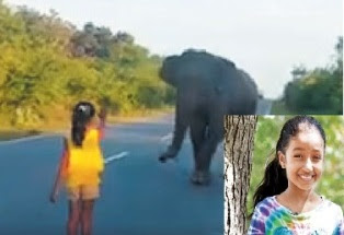 Little Girl Scares Off Elephant