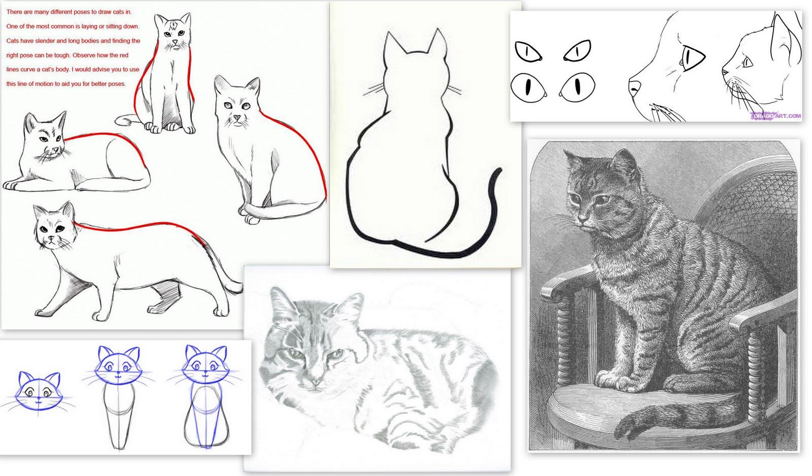 Come si disegna un gatto - Cose Per Crescere