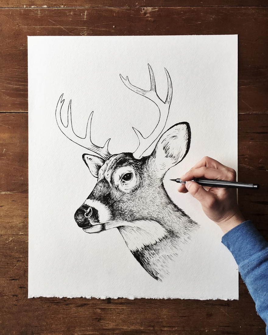 09-Deer-Sam-Larson-Injection-of-Inspiration-in-Diverse-Drawings-www-designstack-co