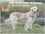 "ORIGINAL BLOG: ""The Adventures of Maxdog"""