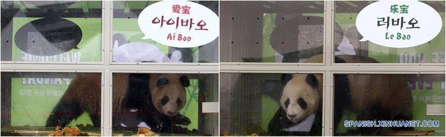 Pandas chinos Ai Bao y Le Bao a su llegada a Corea del Sur