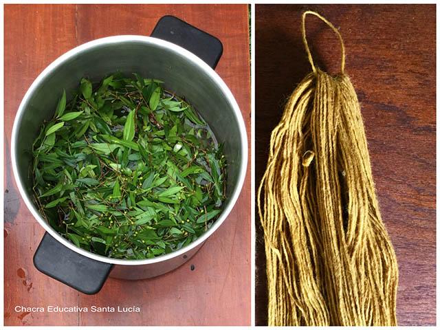 Teñido de lana con hojas de Arrayán - Chacra Educativa Santa Lucía