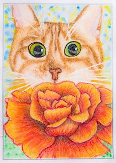 Kass ja roos