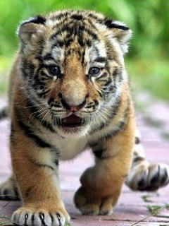 Cute animals with funny faces mobile pictures 240x320 free wallpapers download