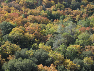 Fall colors on the hillside, orange, yellow, and green leaves along Kincaid Road.