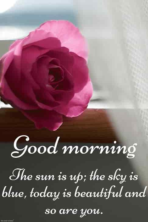 best romantic good morning images for wife with pink rose shining sun and message