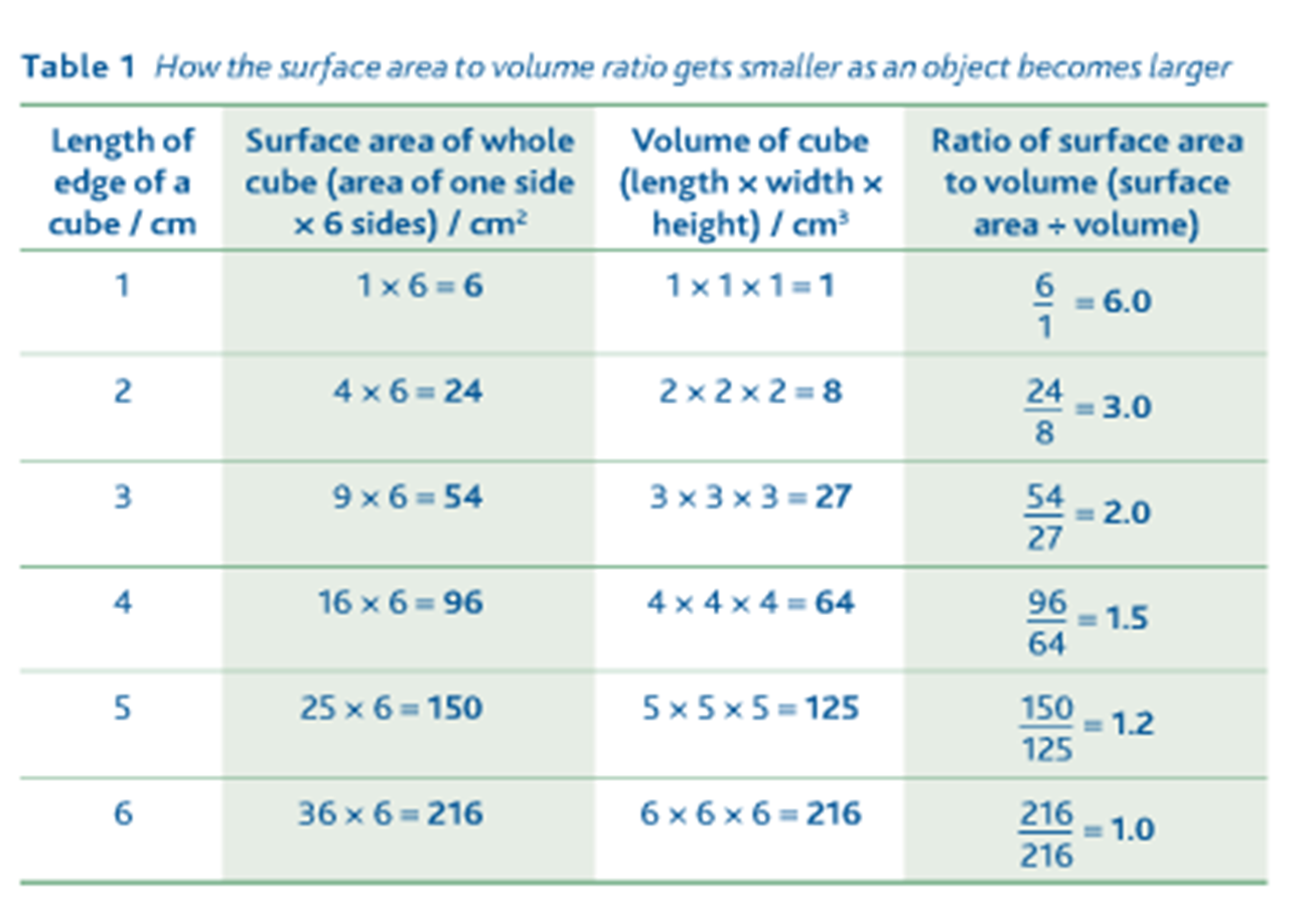As Biology Ms Timms Surface Area To Volume Ratio Images