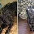 Gatinha machucada e abandonada foi resgatada e está se recuperando