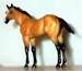 QH Foal