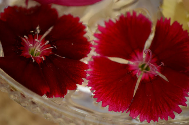 monday vase meme, dianthus, small sunny garden, amy myers