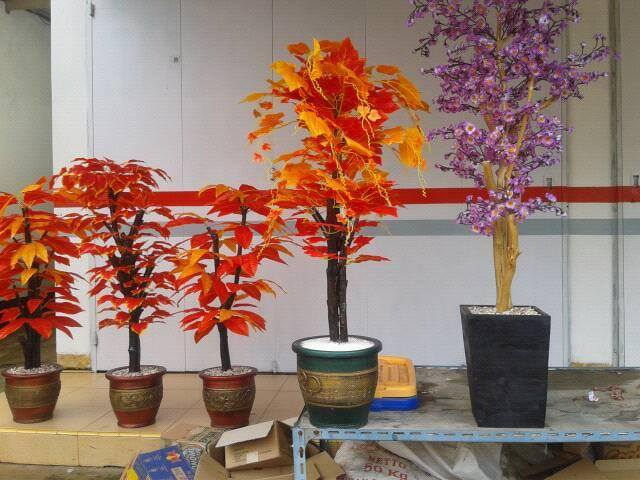 Tanaman-bonsay-hias-nan-indah_0209