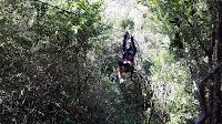 Bosque Nuboso - Costa Rica