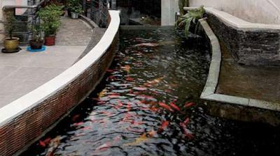 http://dayahguci.blogspot.com/2017/07/cara-memelihara-ikan-mas-di-kolam-rumah.html