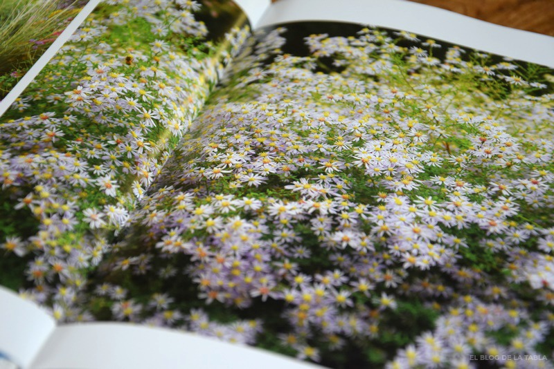 Libro The plant lover's guide to asters.