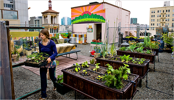 An Edible Roof Garden ! Home Decor