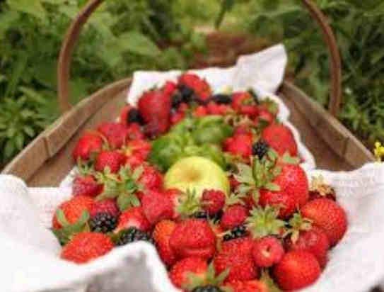 cara merawat strawberry agar berbuah lebat