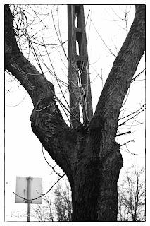Fa és oszlop fekete fehérben