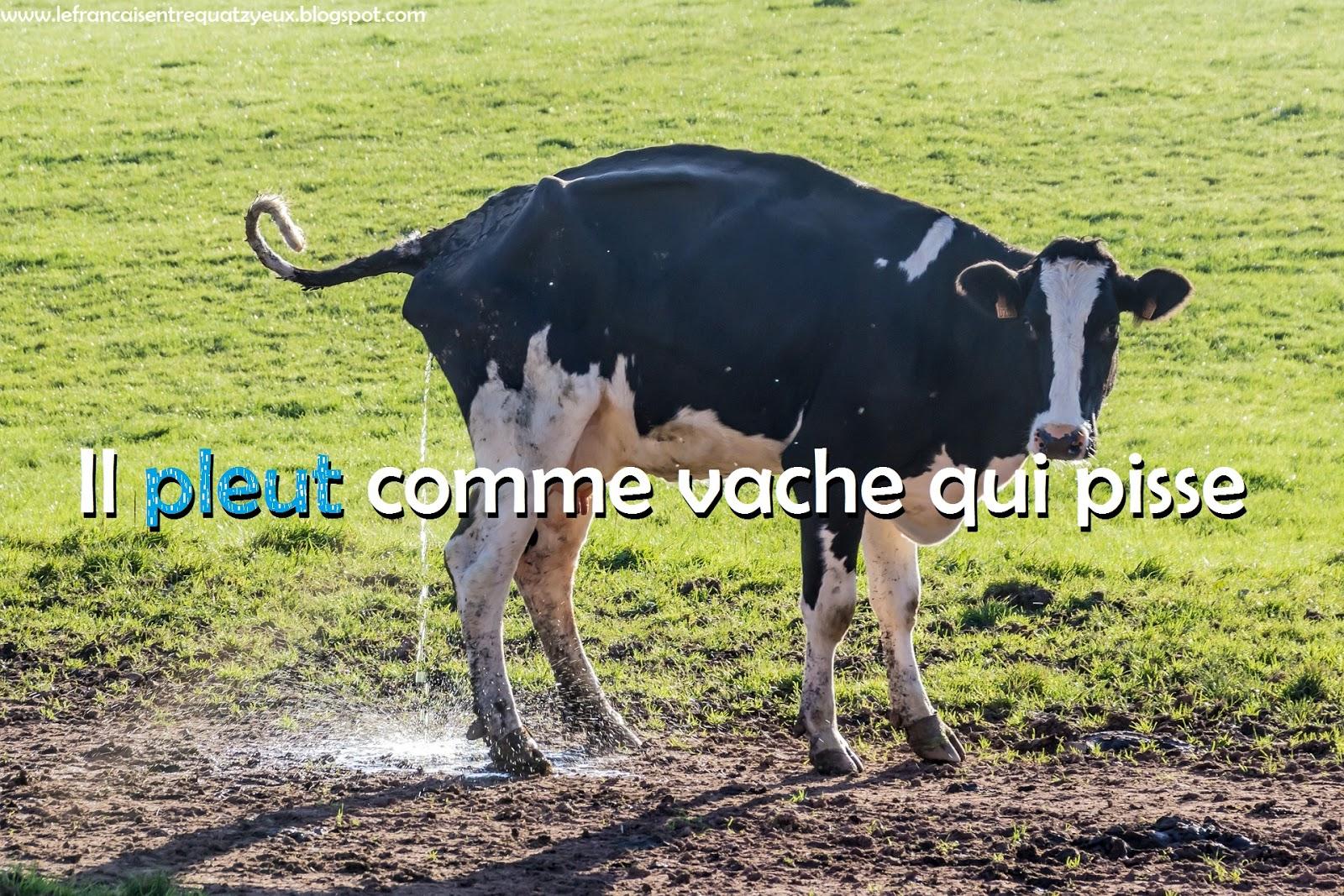 Expressions autour de la pluie (il pleut des hallebardes, comme vache qui  pisse, etc.) | Le français entre quat'z'yeux
