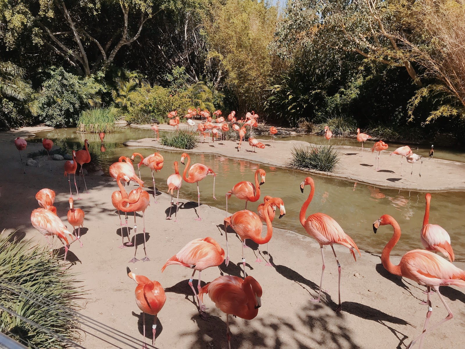 flamingos at the San Diego Zoo | Love, Lenore