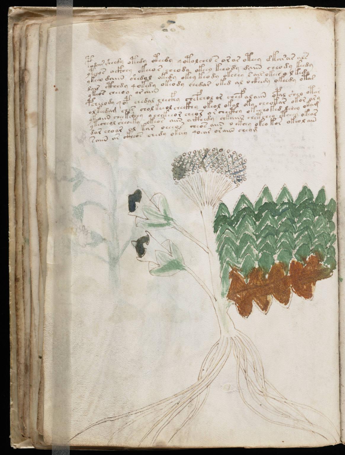 manuscrito060