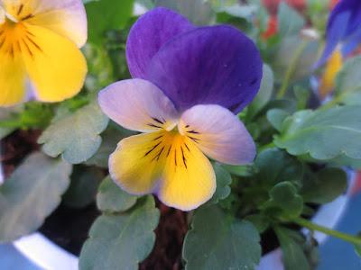 multi-coloured-flower-image-ixus-125-example