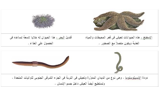 الحيوانات فقارية اللافقارية