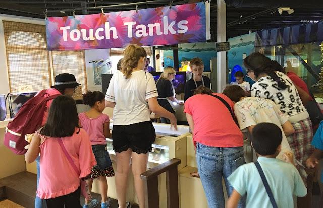 Visita ao Santa Mônica Píer Aquarium em Santa Mônica