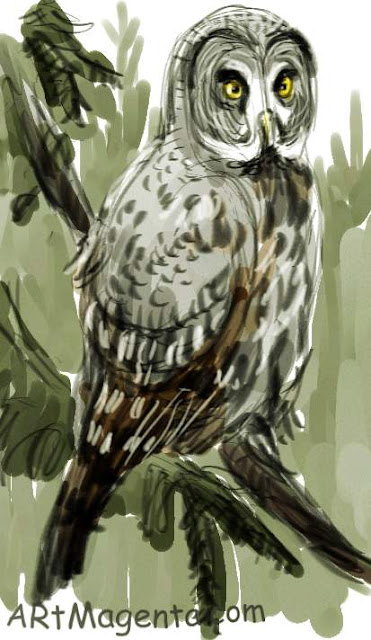 Lapland Owl  sketch painting. Bird art drawing by illustrator Artmagenta.