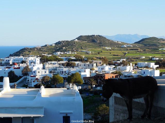 krajobraz Mykonos Grecja, widok na białe domki, góry i morze, grecki osiołek