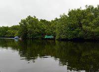 Kawasan Mangrove Batuampar