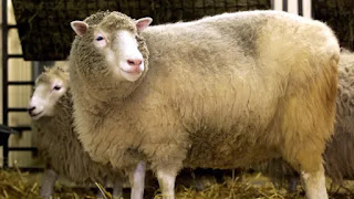 10 Hewan Yang Pernah Di Kloning