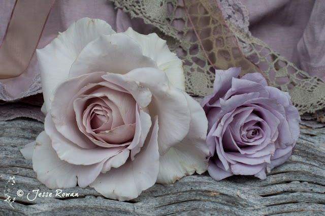 Roses by Jesse Rowan