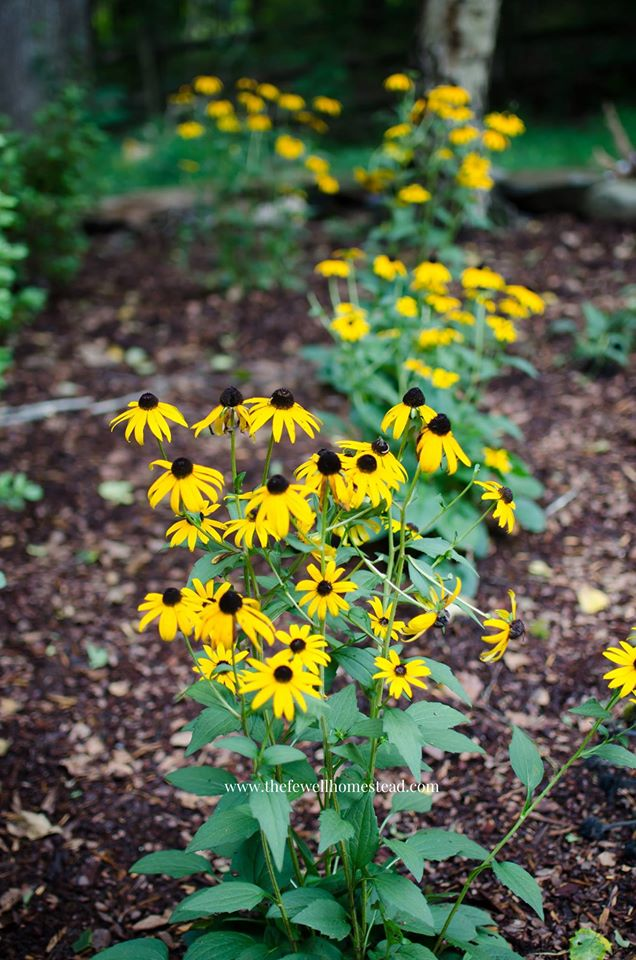 Staring a Medicinal Herb Garden