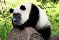 صور حيوانات 2017 اجمل خلفيات حيوانات
