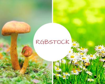 http://www.rgbstock.com/