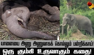 Story of making kumki elephants