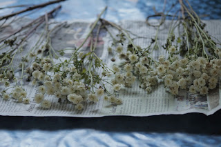 membuat bunga kering